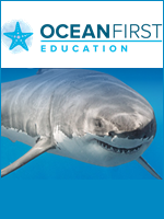 Homeschool Curriculum - Ocean First Education